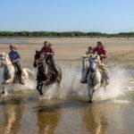 chevaux coureur